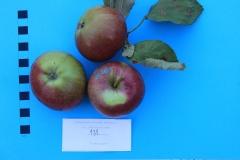 Stare drzewa owocowe Skwierzyna, 131