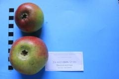 Stare drzewa owocowe Skwierzyna, 2NN Za krzyżem