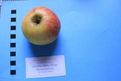 Stare drzewa owocowe Skwierzyna, 3NN Za krzyżem