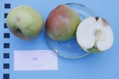 Stare drzewa owocowe Skwierzyna, 49