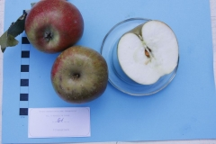 Stare drzewa owocowe Skwierzyna, 51