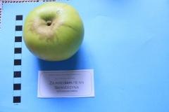 Stare drzewa owocowe Skwierzyna, 6NN Za krzyżem