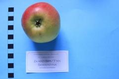 Stare drzewa owocowe Skwierzyna, 7NN Za krzyżem