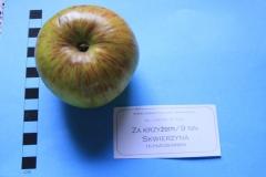 Stare drzewa owocowe Skwierzyna, 9NN Za krzyżem
