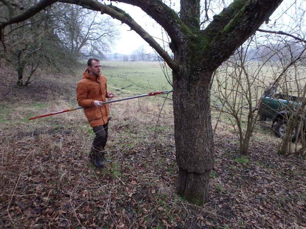 Pobieranie zrazów starych odmian drzew owocowych. Prace poszukiwawcze i pozyskiwanie. 2016