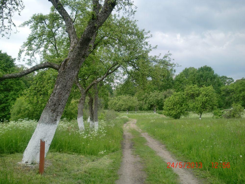 Deans Küchenapfel ~ stare odmiany drzew owocowych leszek ku u0142ak