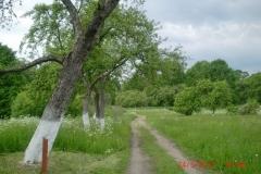 Sad starych odmian drzew owocowych. 2013